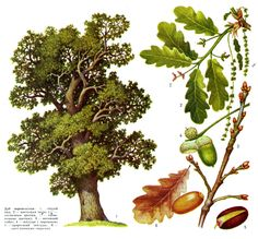 Planting For Kids, Tree Sketches, Fruit, Drawings, Plants, Handmade, Painting, Trees, Google
