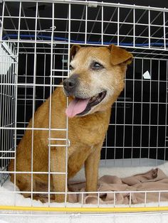 Oldies Club dog rescue volunteer drivers
