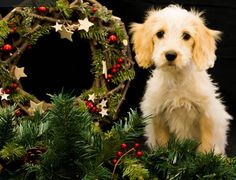 Are you searching for dog grooming in Pinner? Spoilt Rotten Dog Groomer is one of the famous parlors for a pet groomer in Pinner. They are pet lovers, trainers, and behaviorists. They use only Hypoallergenic Shampoos and provide a wide range of dog washing, treatments, and therapies. Their team provides Dog grooming, hand stripping, dog washing and holistic treatment in Pinner at very affordable price. Just contact us for the best Pet services. Chalfont St Peter, Pet Services, Dog Grooming Salons, Holistic Treatment, Dog Wash, Spoiled Rotten, Shampoos, Pet Lovers