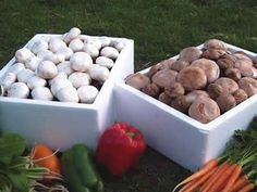 instructions for growing mushrooms without a kit