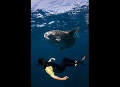 Releasing Hooked Sharks in Baja California, Mexico | Sandra Larriva (Huff Post Green)
