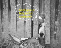 SOLARIS                           : ELE SE FOI? Humor