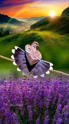 Beautiful Nature Pictures, Amazing Nature, Beautiful Landscapes, Pretty Birds, Beautiful Birds, Animals Beautiful, Wallpaper Nature Flowers, Beautiful Nature Wallpaper, Dove Images