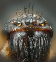 House Spider up close...Some great Macro images of Critters...  http://www.wired.com/wiredscience/2012/10/nikon-creepy-close-ups/?utm_source=Contextly_medium=RelatedLinks_campaign=Previous=5144