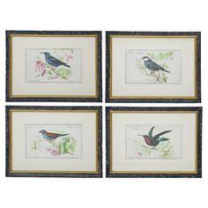 Songbird Framed Prints.
