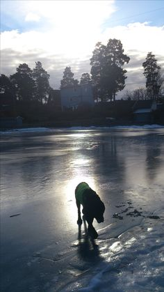 Finally across that slippery ice. Late Evening, Oslo, Early Morning, Ice, Spring, Water, Outdoor, Gripe Water, Outdoors