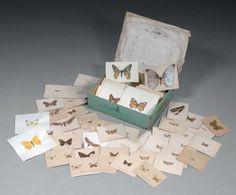 Planches d'entomologiste : environ deux cent- cinquante cartes ornées d'ailes de #papillons aux corps peint à la gouache en trompe-l'oeil. Dans une boîte cartonnée. XIXe siècle. Vente aux #encheres du 18/12/09 par Beaussant Lefèvre