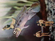 Nannichromis dimidiatus/Bonnita Postma