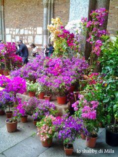 Flora et Decora 2014 -parte prima-