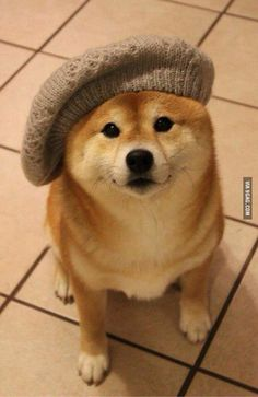 Wow. Much stylish.