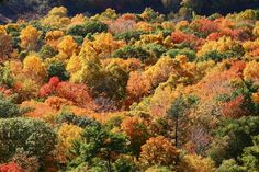 Southern New England reaches peak fall foliage in mid-October, which is a great time to hit these beautiful hiking trails in CT. Autumn Trees, Autumn Leaves, Images Of Colours, Mountain Wallpaper, Seasons Of The Year, Images Google, Fall Diy, Autumn Home, Hiking Trails