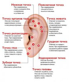 Ear Reflexology, Spine Health, Alternative Treatments, Traditional Chinese Medicine, Medicinal Herbs, Tai Chi, Alternative Medicine, Natural Medicine, Health And Beauty