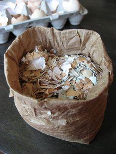 coquilles d œuf recyclées