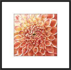 Dahlia watercolor PAINTING orange flower giclee by ASheaDesignLab
