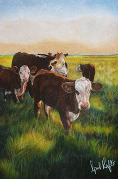 Polled Hereford cattle fine art 11x14