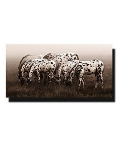 Look what I found on Appaloosa Sepia Wrapped Canvas Appaloosa, Picture Wall, Wrapped Canvas, Pictures, Walls, Horses, Photos, Picture Walls, Photo Illustration