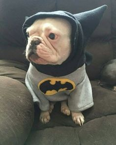 This is Piggy...the baby momma of our Rosie! @busakiller_1 @bos_n_bull_kennel #piggy #froodieshoodies #bosnbullkennel #Frenchie #frenchbulldog #bully #bulldog #batpig #buhi #bouledoguefrançais #bulldogfrances #mama #iambatman #baconmakeseverythingbetter #bestpuppyever #missouri #weloveyou