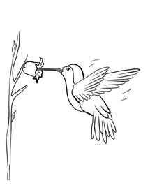Hummingbird Coloring Page from Animals Coloring Pages category. Find out more awesome images to color for your kids Bird Coloring Pages, Pattern Coloring Pages, Cat Coloring Page, Coloring Sheets For Kids, Coloring Pages For Girls, Mandala Coloring Pages, Printable Coloring Pages, Coloring Books, Hummingbird Colors