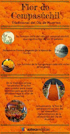 Flor de Cempasúchil #infografia