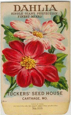 Vintage Flower Seed Packet Tuckers Seed House Lithograph DAHLIA (Carthage, Missouri) via Etsy Vintage Diy, Vintage Ephemera, Vintage Postcards, French Vintage, Vintage Clocks, Flower Prints, Flower Art, Seed Art, Vintage Seed Packets