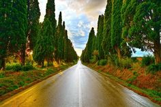Bolgheri wine region, Tuscany, Italy