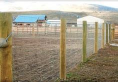 Best fencing for goats | BackYardHerds.
