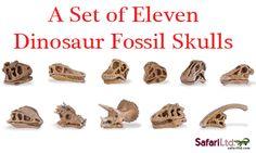A dinosaur model skull set.