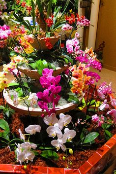 A Latin-American inspired fountain full of orchids (Smithsonian Gardens)