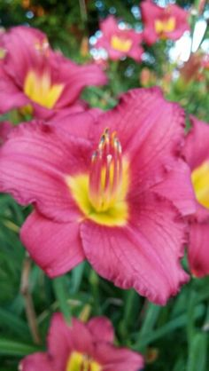 Blur of a moment Blur, Photographs, In This Moment, Plants, Photos, Plant, Planets