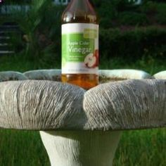 Apple Cider Vinegar 1 capful to keep bird bath clean and reduce algae growth. Also provides vitamins minerals to birds! Apple Cider Vinegar 1 capful to keep bird bath clean… Lawn And Garden, Garden Art, Garden Plants, Bird Bath Garden, Bird Bath Planter, Bird Bath Fountain, Diy Bird Bath, Garden Birds, Garden Totems