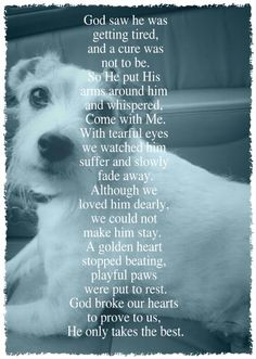 17 Best Dog Loss Quotes On Pinterest Dog Loss Pet Loss Quotes 157517 in post at December 3, 2017 3:53 am