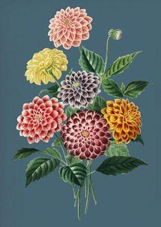 Jigsaw puzzles, puzzle games for kids. Puzzle Games For Kids, Flora Flowers, Flowers Online, Dahlias, Flower Pictures, Dream Garden, Color, Flower Photos, Dahlia