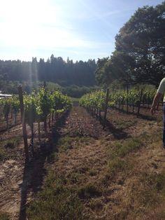 Rued Vineyard - Chardonnay