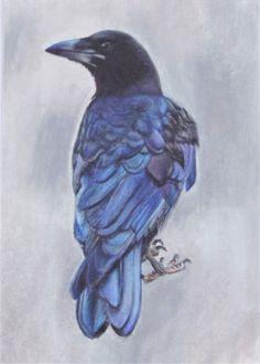 American Crow Original Sketch