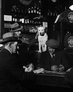 Dog on Bar Watching Game - Photo by Bill Brandt http://everyday-i-show.livejournal.com/105438.html