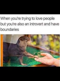 impressive Hilarious Memes That Will Make Every Introvert Laugh Out Loud