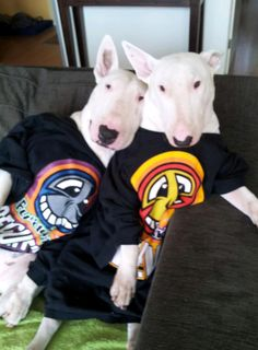 Hanging out and being groovy  #Bull #Terrier #dogs