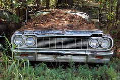 Abandoned autos | ... is Full of Abandoned Muscle Cars and Classics Photo Gallery