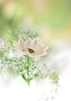 soft and subtle white flower