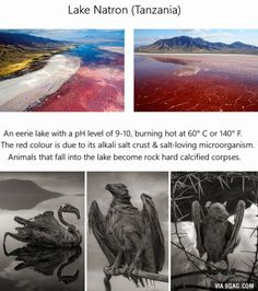 If you see a red lake, don't swim Wow Facts, Wtf Fun Facts, Random Facts, Funny Facts, Beautiful Places To Travel, Cool Places To Visit, Photo Trop Belle, Red Lake, Posca Art