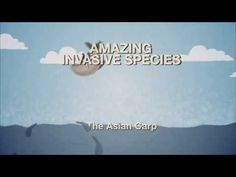 Meet the Asian Carp -- an Amazing Invasive Species - YouTube
