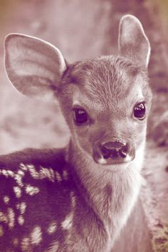 cute animals, adorable deer, animal pictures and it Bambi Cute Creatures, Beautiful Creatures, Animals Beautiful, Beautiful Eyes, Pretty Animals, Colorful Animals, Woodland Creatures, Pretty Eyes, Beautiful Babies