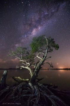 **Lake Weyba Milky Way** - Hey,  Went up to Noosa Heads, Australia with DK Photography and shot some extreme Astrophotography for a few nights a couple weeks ago.  Got this cool shot of this tree up there at Shreks Swamp.  Tripods side by side as we both got the shot.  Canon 6D + Canon 16-35mm f/2.8 lens. Iso-3200 / f2.8 / 30 second exposure / 16mm  Hope you like this, Thanks for looking!