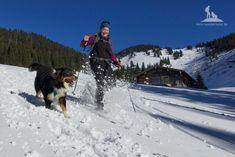Wandern mit dem Hund: Hier gibt es Tipps zu Wander- und Berg-Touren mit Hund, Ausflugszielen mit Hund und Urlaub mit dem Hund. Wanderhund-getestet!
