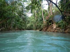 Tubing on the White River, Jamaica. Best excursion ever!!!!  Omg truly one of the best times!!!!