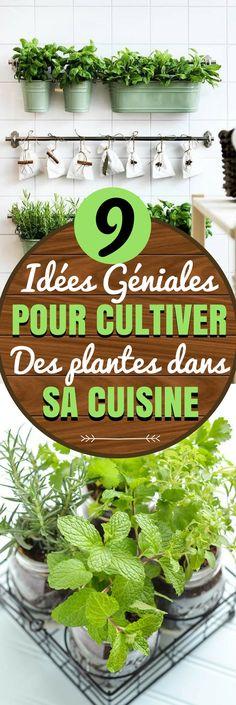 Voici 9 Façons DE CULTIVER DE PLANTES D'INTÉRIEURE POUR LA DECO DE LA CUISINE. Qu'est-ce qui pourrait être plus écologique que de cultiver des plantes directement dans votre cuisine ? Cultiver des plantes à l'intérieur de sa cuisine n'est pas sans défis, mais si votre cuisine a suffisamment de lumière, vous allez pouvoir transformer votre cuisine ! Voici quelques idées pour vous aider à démarrer…#deco #idéesdéco #diy #cuisine #décoration #chasseursdastuces
