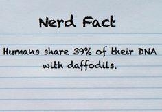 nerd+quirks | Nerd Quirks | RANDOM FACTS