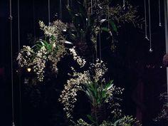 string gardens, eco interiors, Japanese Kokedama, interior gardening ideas, Fedor Van der Valk, hanging gardens
