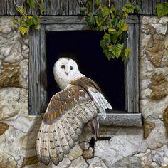 """Patient Observer"" Barn Owl perched on a window won 2018 Best Wildlife, International Guild of Realism Camille Engel is a. Beautiful Owl, Animals Beautiful, Cute Animals, Owl Photos, Owl Pictures, Owl Bird, Bird Art, Fennec, Owl Artwork"