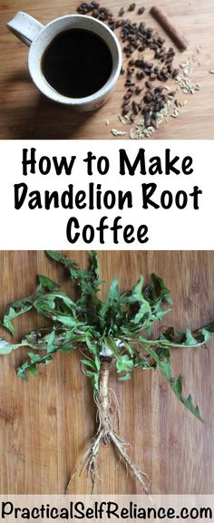 Remedies How to Make Dandelion Root Coffee ~ With roasted dandelions ~ wild foraged food - This caffeine-free wild foraged dandelion coffee is tasty on its own, or with a bit of milk of sugar added. Dandelion Coffee, Dandelion Jelly, Edible Plants, Edible Flowers, Dandelion Recipes, Wild Edibles, Greens Recipe, Medicinal Plants, Permaculture